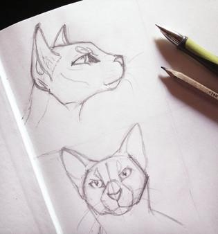 cats study.jpg