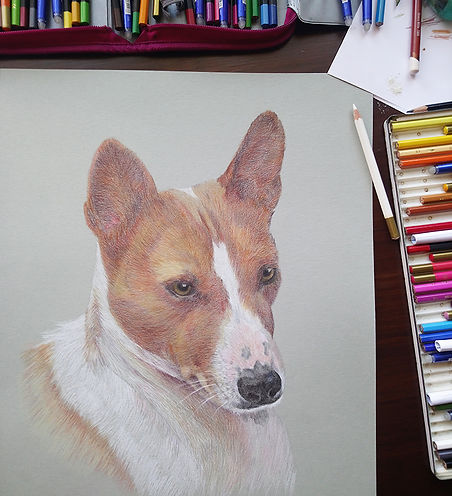 basenji dog portrait-2.jpg