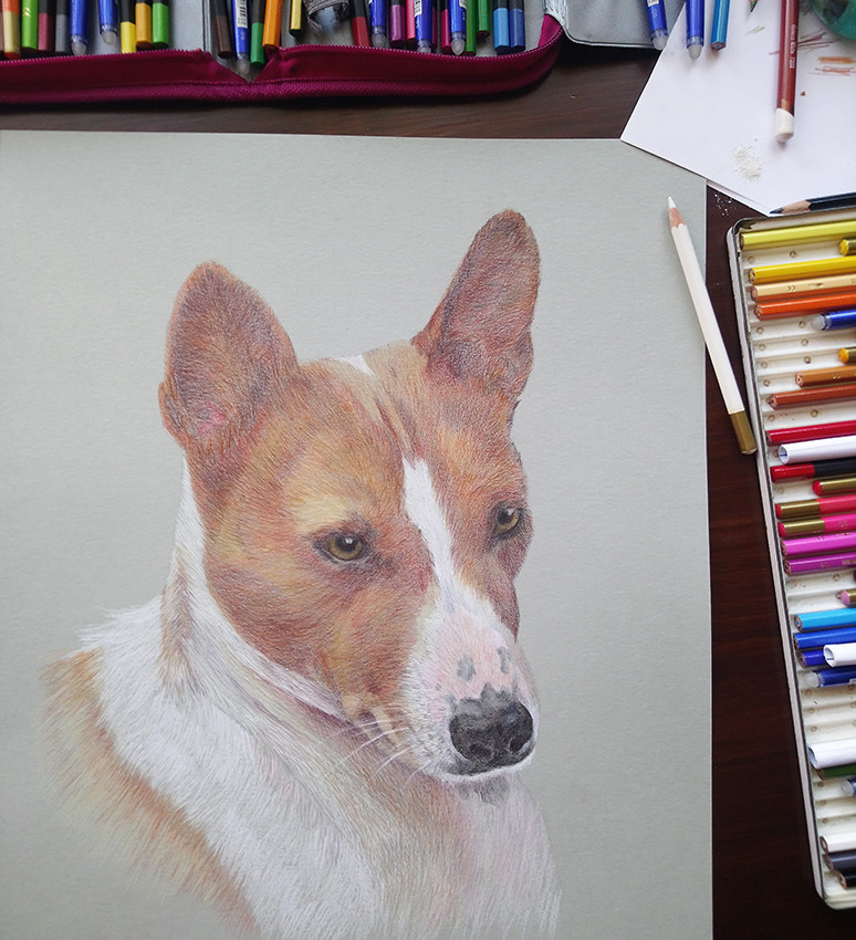 basenji dog portrait-2.jpg