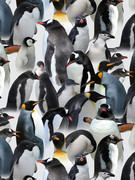 pinguines.jpg
