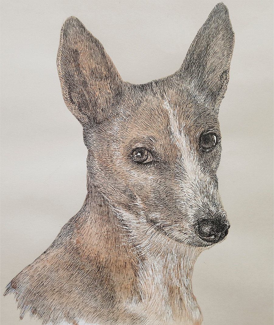 drawing of basenji dog made with watercolor, black and white liners