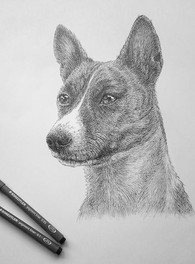 basenji dog portrait.JPG