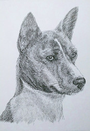 dog drawing-liner.jpg