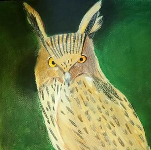 fish owl.jpg