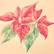 watercolor-puansettia.JPG
