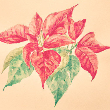 watercolor-puansettia.JPG