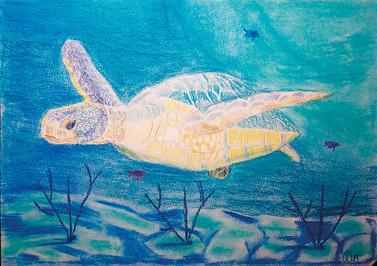 морская черепаха-1.jpg