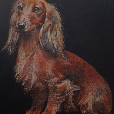 pastels dog portrait-1.jpg