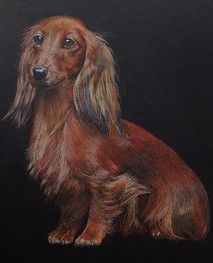 pastels dog portrait.jpg