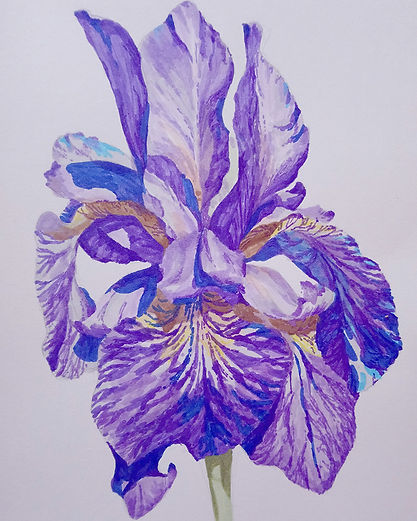 iris watercolor.JPG