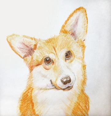 corgi portrait1.jpg