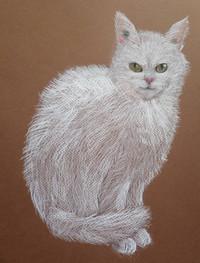 кот Алисы.jpg