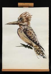 bird drawing.jpg