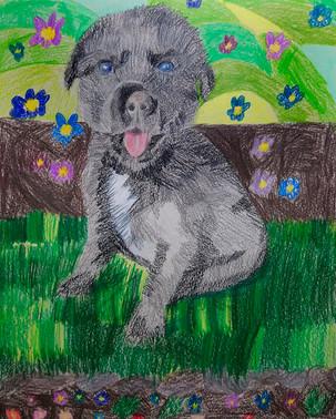 портрет щенка-1.jpg
