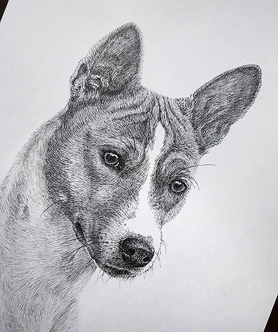 doggy.jpg