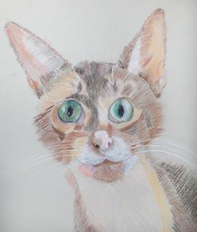Lisa cat-1.jpg