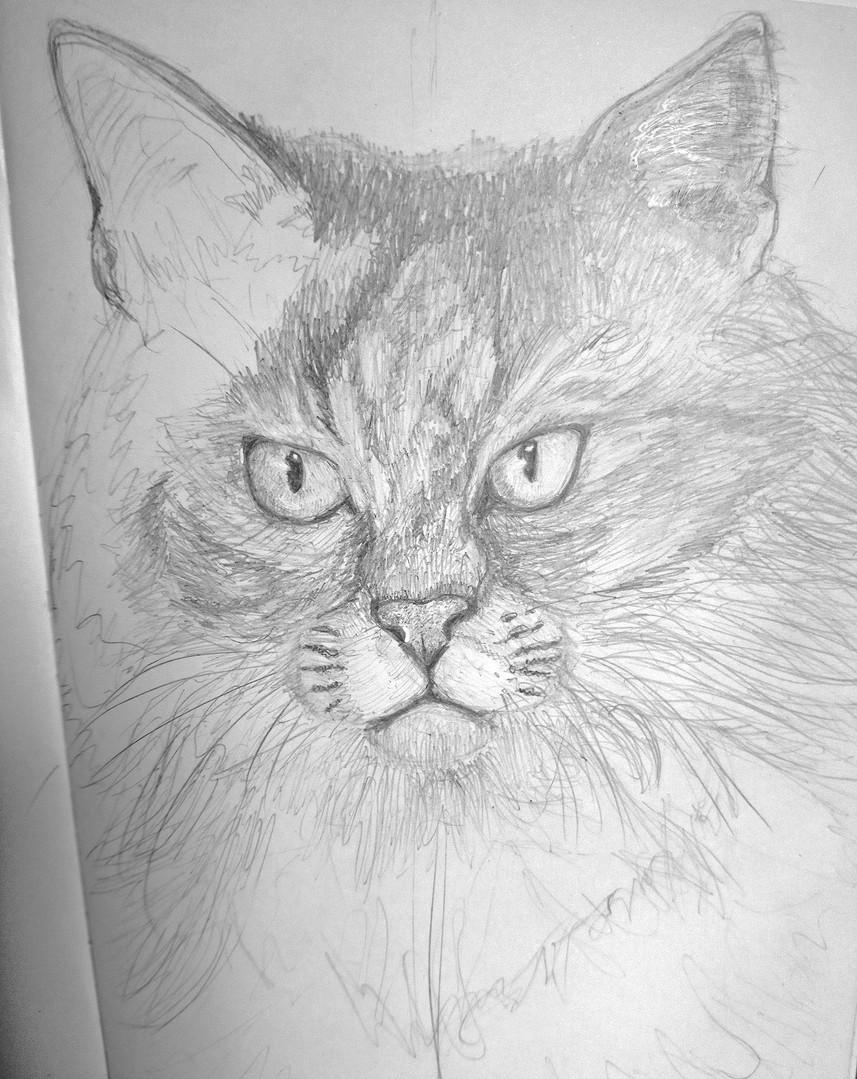 Cat drawing.jpg