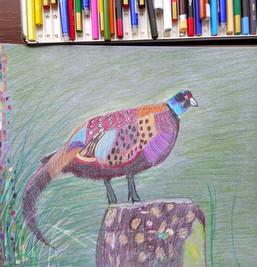 pheasant1.jpg
