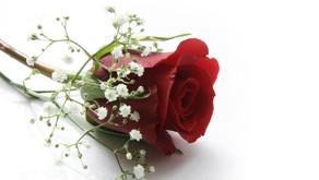 Una rosa in due