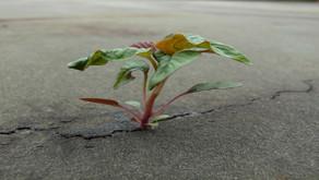 Solo Dio fa crescere