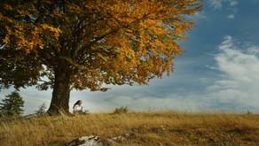Meditare libera dallo stress