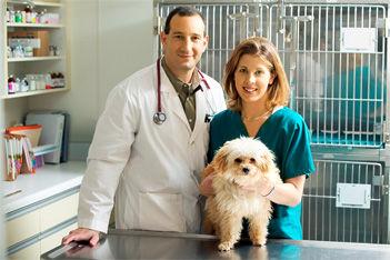 Consulta Veterinaria Medico De Turno