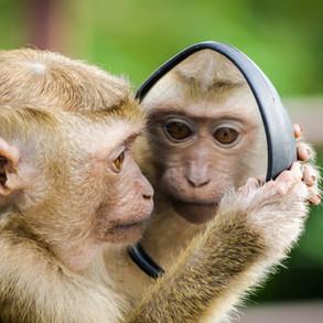 Neem jij vaak 'apen' over van anderen?