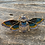 Thumbnail: Blue Moth Sparkle Brooch
