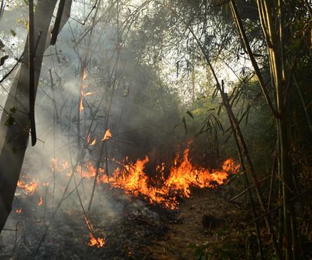 3º incêndio em floresta com bambu