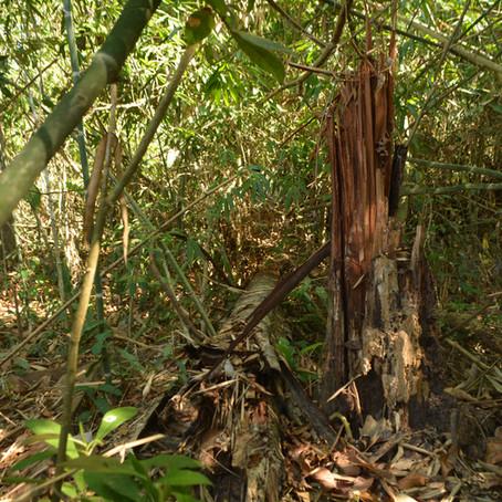 Amazônia: pesadelo geopolítico ou questão de soberania?