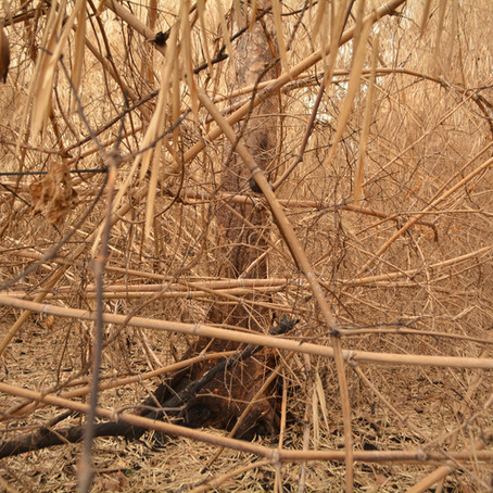 Os incêndios florestais recentes e a mudança paradigma