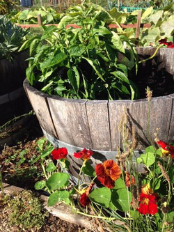 Wine Barrel with Peppers for Food Bank_edited.jpg