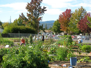 Renew and Sign Up for Garden Plots