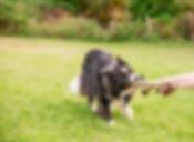 Hundeshooting 2018-78.jpg