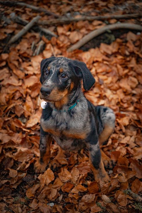 Dogshooting sash infinity photoart