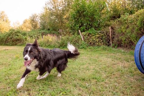 Hundeshooting sash infinity photoart und CaniCus Hundetraining