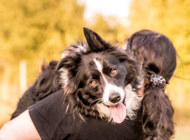 Hundeshooting sash infinity photoart