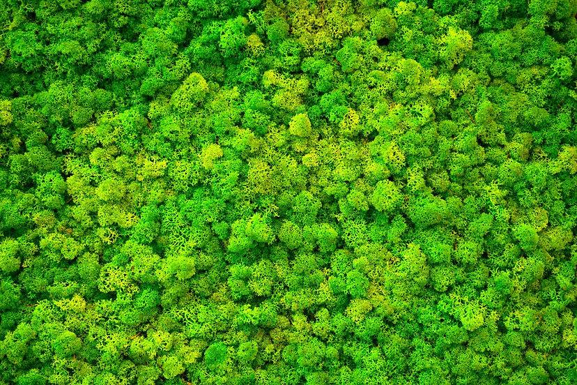 green-moss.jpg