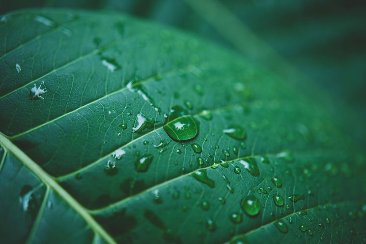 rain-water-green-leaf-macro.jpg