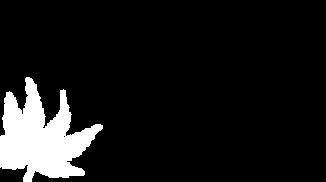 Leaf-background-2.png