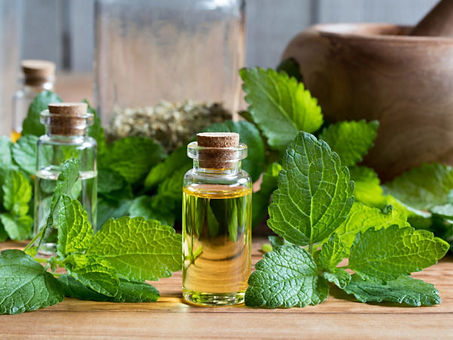 Lemon-Balm-Oil_-Guide-To-Essential-Oils_