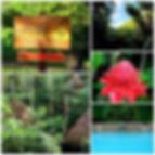 dthv collage.jpg