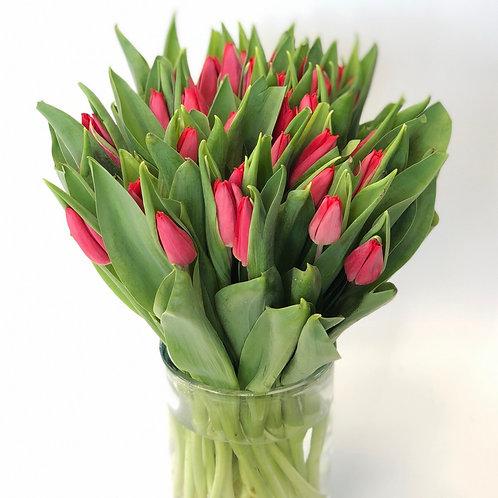 Tulpės (raudonos)