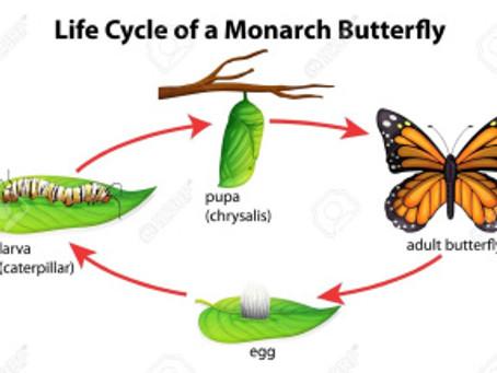 #Shift    When a Caterpillar turns into a Butterfly Pt. 2