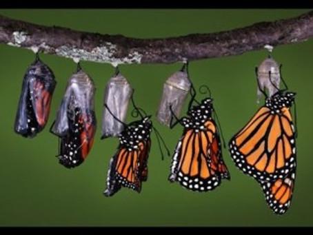 #Shift    When a Caterpillar turns into a Butterfly Pt. 1