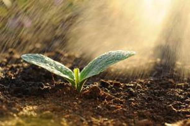 Rain and small plant