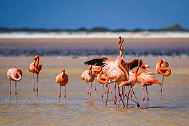 Flamingo-2.jpg