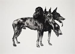 chien à 4 têtes, gravure