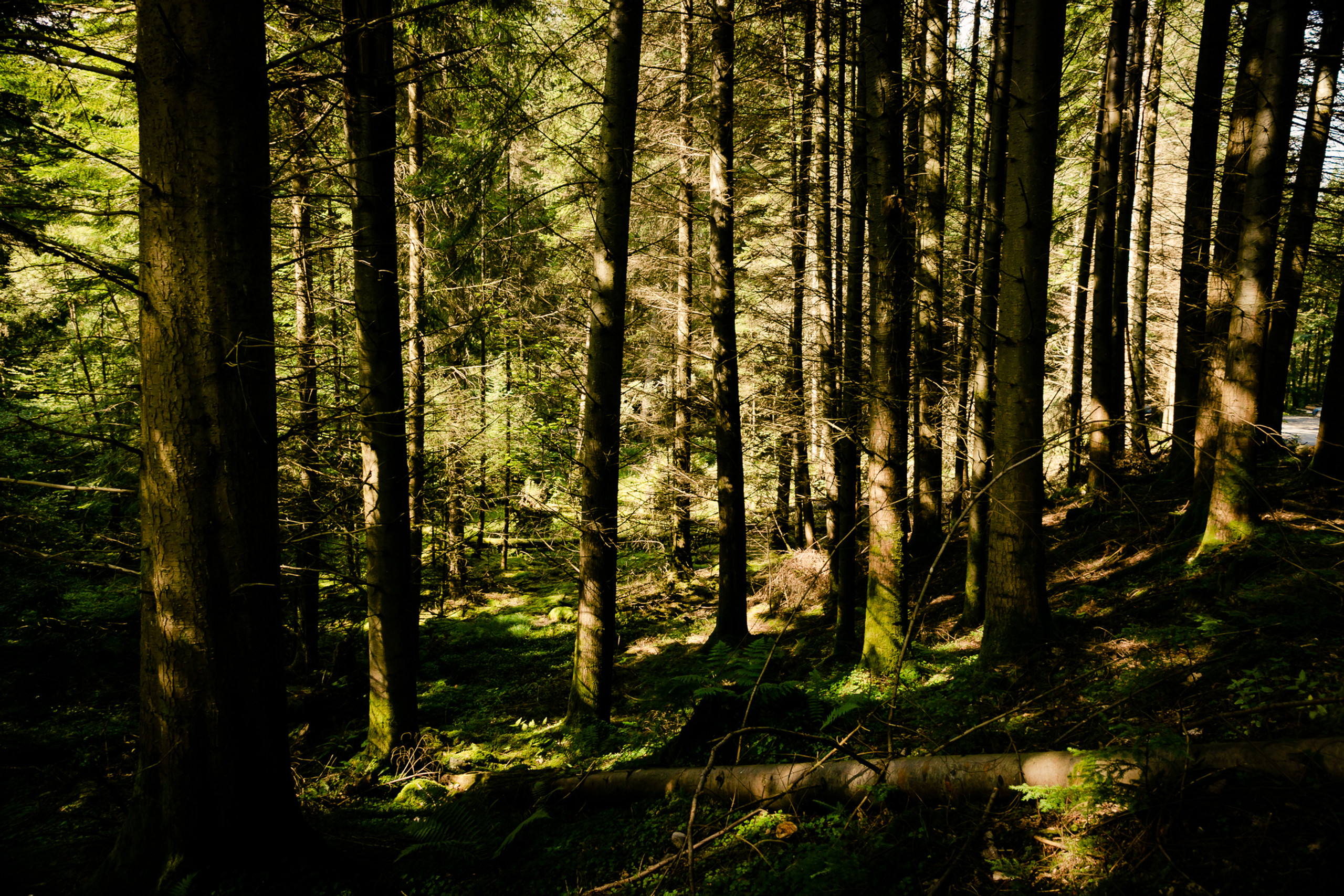 An Enchanted Forest in Scottish Highlands. Scotland, landscapes, hiking