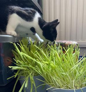 bea bap grass.jpg